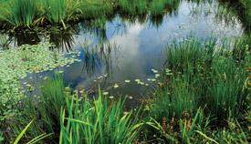 Grass & Wetland